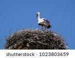 cigoc  croatia   june 18  white ...   Shutterstock . vector #1023803659