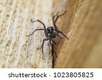 portrait of fiddleback spider ...   Shutterstock . vector #1023805825