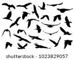 set of realistic vector... | Shutterstock .eps vector #1023829057