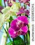 beautiful pink orchid flower... | Shutterstock . vector #1023852241