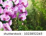 beautiful pink orchid flower... | Shutterstock . vector #1023852265
