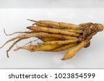Small photo of Modify of root or adventitious root for study botany in Lab.