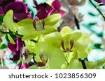 beautiful yellow and pink... | Shutterstock . vector #1023856309