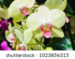 beautiful yellow and pink... | Shutterstock . vector #1023856315