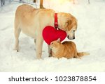 cute scene. dog and cat playing ... | Shutterstock . vector #1023878854