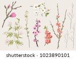 blooming gargen. spring flowers ... | Shutterstock .eps vector #1023890101