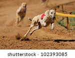 greyhound at full speed during... | Shutterstock . vector #102393085