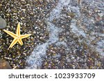 seashells and starfish on the... | Shutterstock . vector #1023933709