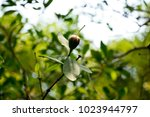 mangrove flower  marginal...