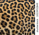 Small photo of Close up leopard fur background.