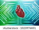 3d illustration  anatomy of... | Shutterstock . vector #1023976831