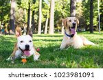two buddies in the park | Shutterstock . vector #1023981091