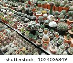 various kinds of cactus and... | Shutterstock . vector #1024036849