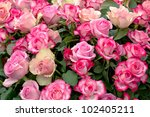 Stock photo beautiful summer bunch of flowers 102405211
