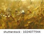 a mature ear of barley swaying... | Shutterstock . vector #1024077544