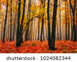 autumn forest. foggy morning in ... | Shutterstock . vector #1024082344