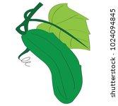 vector image of a green cucumber | Shutterstock .eps vector #1024094845