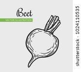 beet vector illustration.... | Shutterstock .eps vector #1024110535