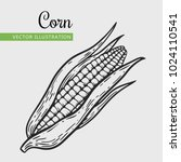 corn vector illustration.... | Shutterstock .eps vector #1024110541