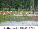 huge flock of great white...   Shutterstock . vector #1024114741