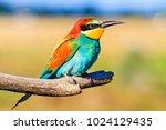 rainbow bird with an exotic... | Shutterstock . vector #1024129435