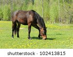 Horse in the field - stock photo