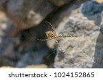 spider in spiderweb close up   Shutterstock . vector #1024152865