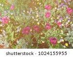 big flowerbed of tulips and... | Shutterstock . vector #1024155955