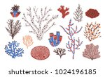 collection of various corals... | Shutterstock .eps vector #1024196185