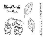 hand drawn painted set of... | Shutterstock . vector #1024196989