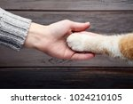 female hand with cat paw on... | Shutterstock . vector #1024210105