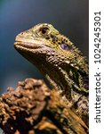 lizards close up macro shots... | Shutterstock . vector #1024245301