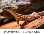 lizards close up macro shots... | Shutterstock . vector #1024245307