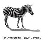 zebra side view. i | Shutterstock . vector #1024259869