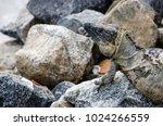 iguana lizard texture skin... | Shutterstock . vector #1024266559
