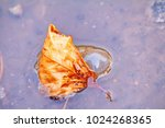 one yellow leaf floating in a...   Shutterstock . vector #1024268365