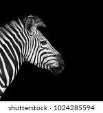Zebra Head On A Black Background