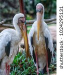 Two Pelican Discussing.