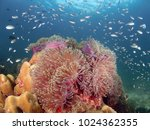 wide angle shot of soft anemone ... | Shutterstock . vector #1024362355