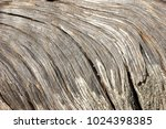 natural wooden texture of the...   Shutterstock . vector #1024398385