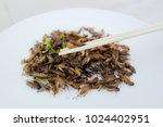 Fried Crickets On A White Dish...