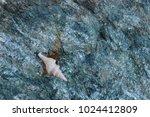 fossil shells on the rock  sea... | Shutterstock . vector #1024412809