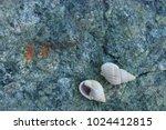 fossil shells on the rock  sea... | Shutterstock . vector #1024412815