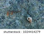 fossil shells on the rock  sea... | Shutterstock . vector #1024414279