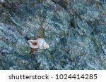 fossil shells on the rock  sea... | Shutterstock . vector #1024414285