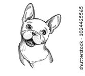 hand drawn vector dog. french...   Shutterstock .eps vector #1024425565
