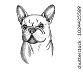 hand drawn vector dog. french...   Shutterstock .eps vector #1024425589