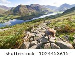 Small photo of Views of Lake Buttermere on route to the summit of Red Pike with Robinson, Dale Head and Fleetwith Pike in the distance. The English Lake District, UK.