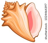 vector illustration of a conch... | Shutterstock .eps vector #1024464397