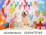 Stock photo labrador retriever dog with a birthday cake and a party hat 1024473769